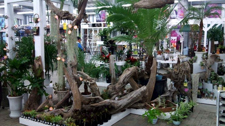 流木を使用した店頭ディスプレイ例(チランジアコーナー)